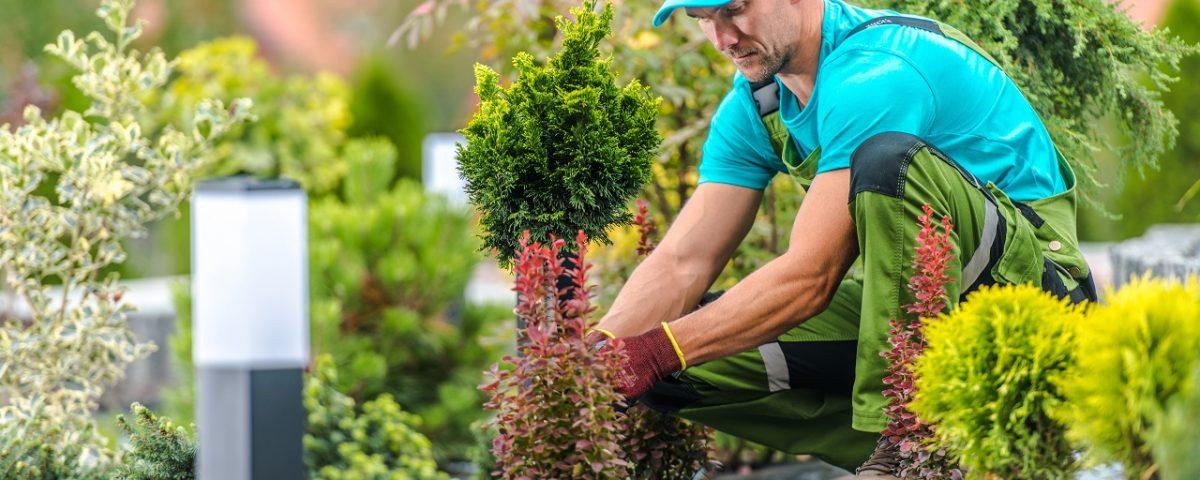 paysagiste pour création de jardin à Marseille