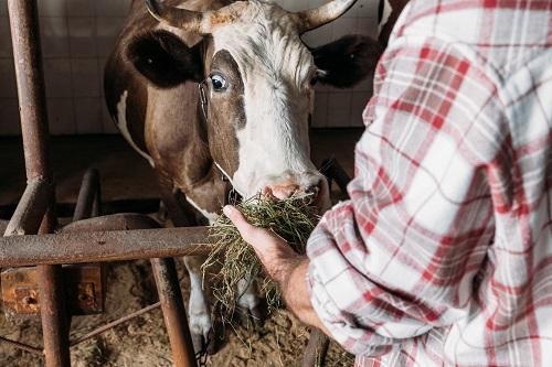 une solution fourragère pour les animaux